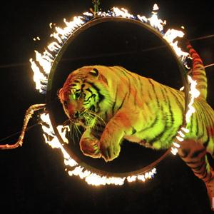 Цирки Тюмени