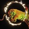 Цирки в Тюмени